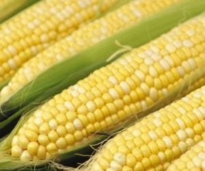 14437_corn-300x250