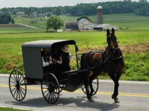 Amish farmers face scrutiny over farming practices