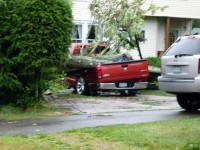 Truck crushed by falling tree near Allegany Avenue